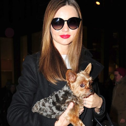 celebrities-dogs-pets-national-dog-day-03
